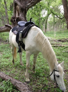 My horse by the big Cotton Wood at the end of the trail.