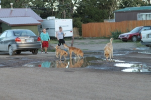 Loose dogs, kids and potholes in East Glacier, MT
