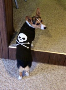 Punk rock dog