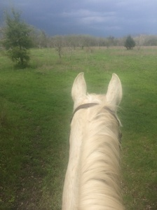 Watching the coming storm and trying to get back to the barn in time.