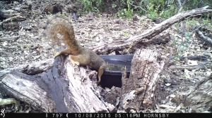 Skeeter the Squirrel getting a drink