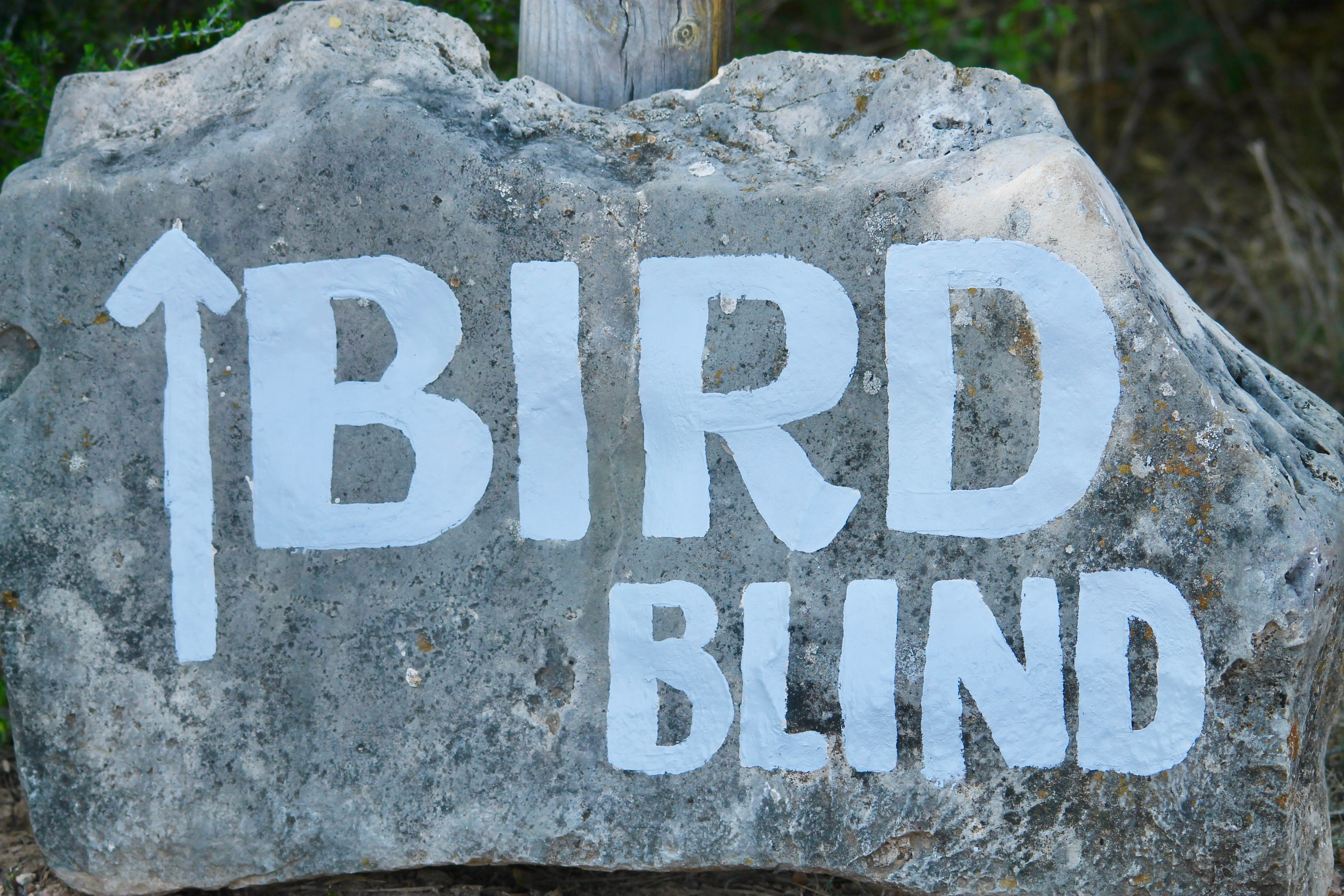 Bird Blinds Ahead